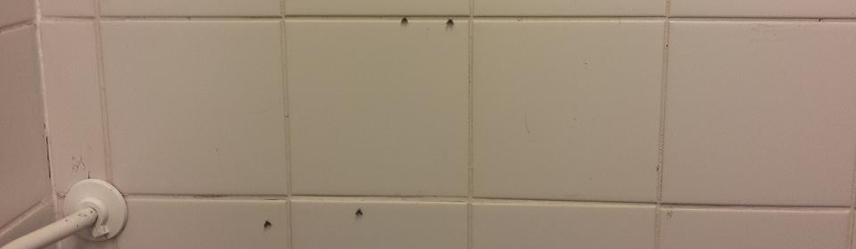 rioolvliegjes in badkamer